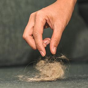 Fjerning af husdyr hår
